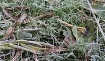 Заморозки в Украине до -5 градусов: назвали регионы