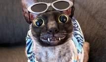 Чеширський кіт існує: його звати Піксель і він дуже популярний у соцмережах