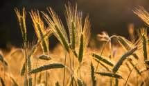 Рекордный урожай при низкой урожайности: особенности украинского аграрного производства