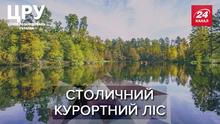 Найдорожча земля в Україні: кому роздають ділянки в Пущі-Водиці