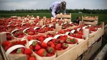 Німеччина продовжила дозвіл на в'їзд сезонних працівників: терміни
