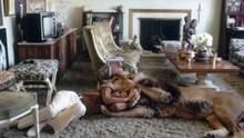 90-річна бабуся Дакоти Джонсон живе з тиграми та левами: фото