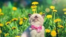 Прогноз погоди на 10 липня: в Україні буде сонячно, але не спекотно