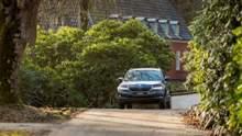 Смачне Закарпаття: як організувати гастротур на авто та що варто відвідати