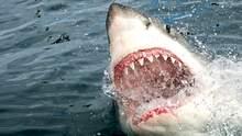 В Египте акула покусала украинцев: ребенок потерял часть руки и находится в реанимации