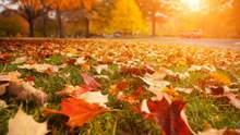 Прогноз погоди на 1 листопада: на Заході буде сонячно, на Сході – дощ,