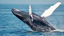 Скелет кита, которому 5 тысяч лет: в Таиланде обнаружили редкую находку – фото