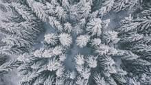 В Україну суне негода: останні дні листопада будуть сніжними та холодними