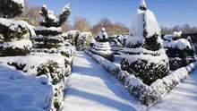 В Украине выращивают 13 миллионов новогодних елок: плантация есть в каждой области