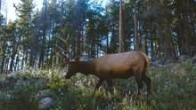 Попал в смертельную ловушку: молодого лося спасли на Черниговщине – фото
