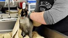 У Нью-Йорку майже сотню котів врятували з пожежі: деталі