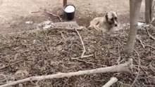 """Туші свиней і помираючі від голоду собаки: на Одещині знайшли тваринний """"концтабір"""" – відео"""