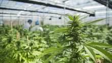 Уже 16 из 50: в каком еще штате США легализовали марихуану