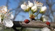 Тепло не буде стабільним: яку погоду очікують у квітні – прогноз