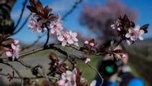 Прогноз погоди на 12 квітня: на Заході буде сонячно, але на Сході – дощитиме