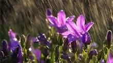Прогноз погоды на 15 апреля: Украину накроют дожди, холоднее всего будет на Западе