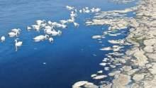 700 лебедів оселилися на Тузлівському лимані