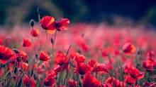 Ніколи знову: картинки-привітання з Днем пам'яті і примирення