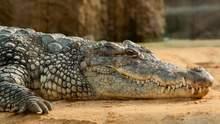 Мертвого крокодила нашли на берегу Азовского моря в Кирилловке