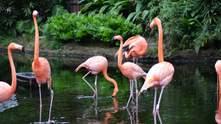 Дополняет пустыню: в ОАЭ появится масштабный центр наблюдения за фламинго – невероятные фото