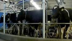 В Австралии начала функционировать роботизированная ферма