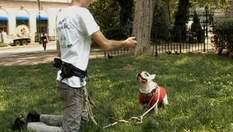 Pet Check - приложение для смартфонов, которое позволяет контролировать прогулку собак