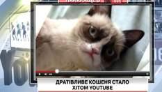 Відео з дратівливим кошеням стало хітом на Youtube
