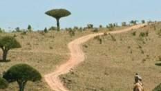 Сокотра - унікальний уламок африканського континенту