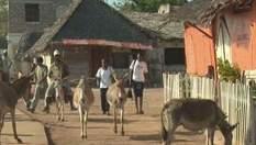 Найроби - город мирной жизни воров и животных