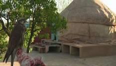 """Казахський степ - """"центр світу"""" на квіткових килимах"""
