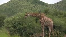 Подорож у Зімбабве: Національний заповідник Хванге (Відео)