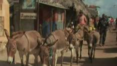 Ламу - остров ослов (Видео)