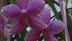 Веракрус и Каймановы острова - земли орхидей, ванили и голубых игуан