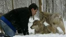Як приручити хижака: історія про те, як людина зживається з вовками