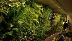 Вертикальні сади: неймовірне єднання міста та природи у роботах Бланка