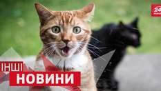 """ДРУГИЕ новости: что заставляет котов """"взлетать"""" в воздух, почемуголкиперам нельзя оставлять поле"""