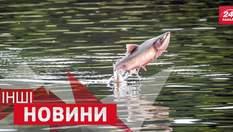 ДРУГИЕ Новости. Как разрушить стену силой голоса и почему рыба решила полетать