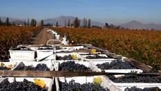 Як чилійські вина завоювали світ