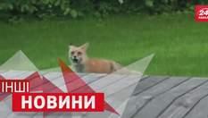 ІНШІ новини. Тварини переспівали пісню Linkin Park. Танці на футбольному полі
