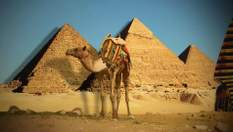 Забальзамовані тварини та прикраси фараонів: чим зачаровують музеї Єгипту