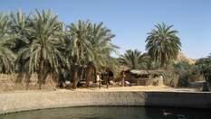 Подорож унікальними оазами Єгипту