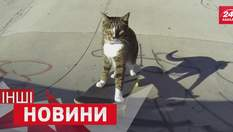 ДРУГИЕ новости. Кот на скейте стал звездой сети. Почему учителя устроили массовую драку
