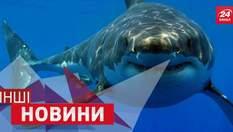 ДРУГИЕ новости. Акула и селф-палка. Самый длинный в мире велосипед