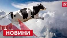 ДРУГИЕ новости. Лучше. Корова 4 года провела на крыше. Кто осмелился стать камерой №1 в мире