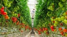 Как австралийцы необычным способом могут преодолеть голод на Земле