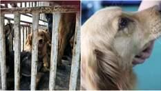 Собака, яку врятували від жахливої смерті, розплакалася: милі фото, відео
