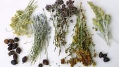 Неповторний продукт в домашніх умовах: перші дослідження Клима Житника