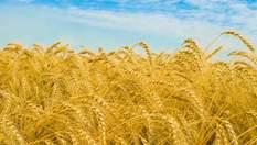 Рейдерство в Україні: як побороти криваву хвилю битви за врожай