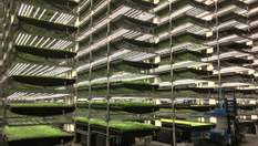 """Чем полезны вертикальные фермы – инновационные """"грядки"""" для выращивания овощей"""