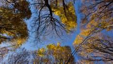 Прогноз погоди на 16 жовтня: осіннє літо не збирається відступати